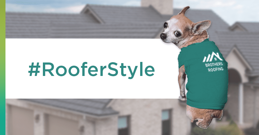 outfit your roof dog